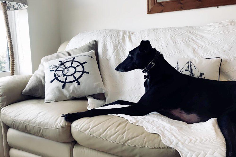 Dog Friendly Apartment
